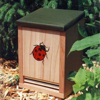 Ladybug Redwood Box House 10 inch