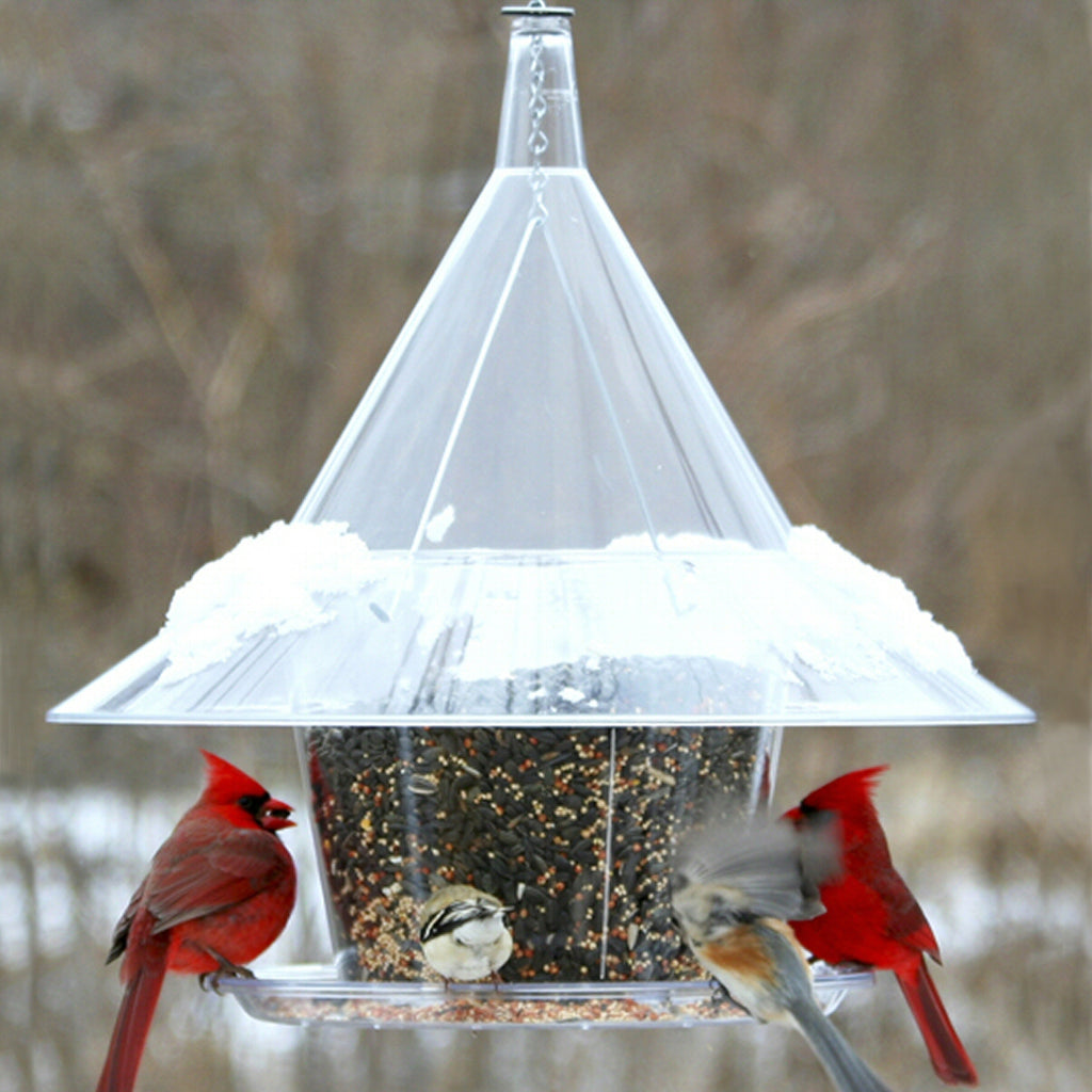 Sky Cafe Squirrel Proof Bird Feeder w/Dividers - Momma's Home Store