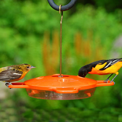 Deluxe Oriole Nectar Bird Feeder 16 oz