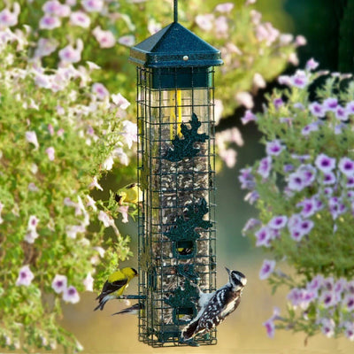 Brome Squirrel Solution 200 Bird Feeder