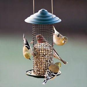Magnum Mini Sunflower Seed Bird Feeder