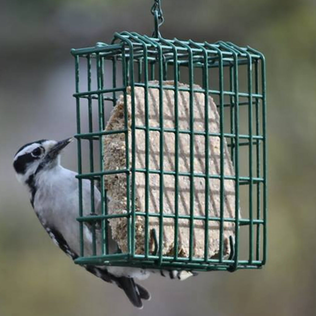 EZ Fill Suet Feeder Basket Green