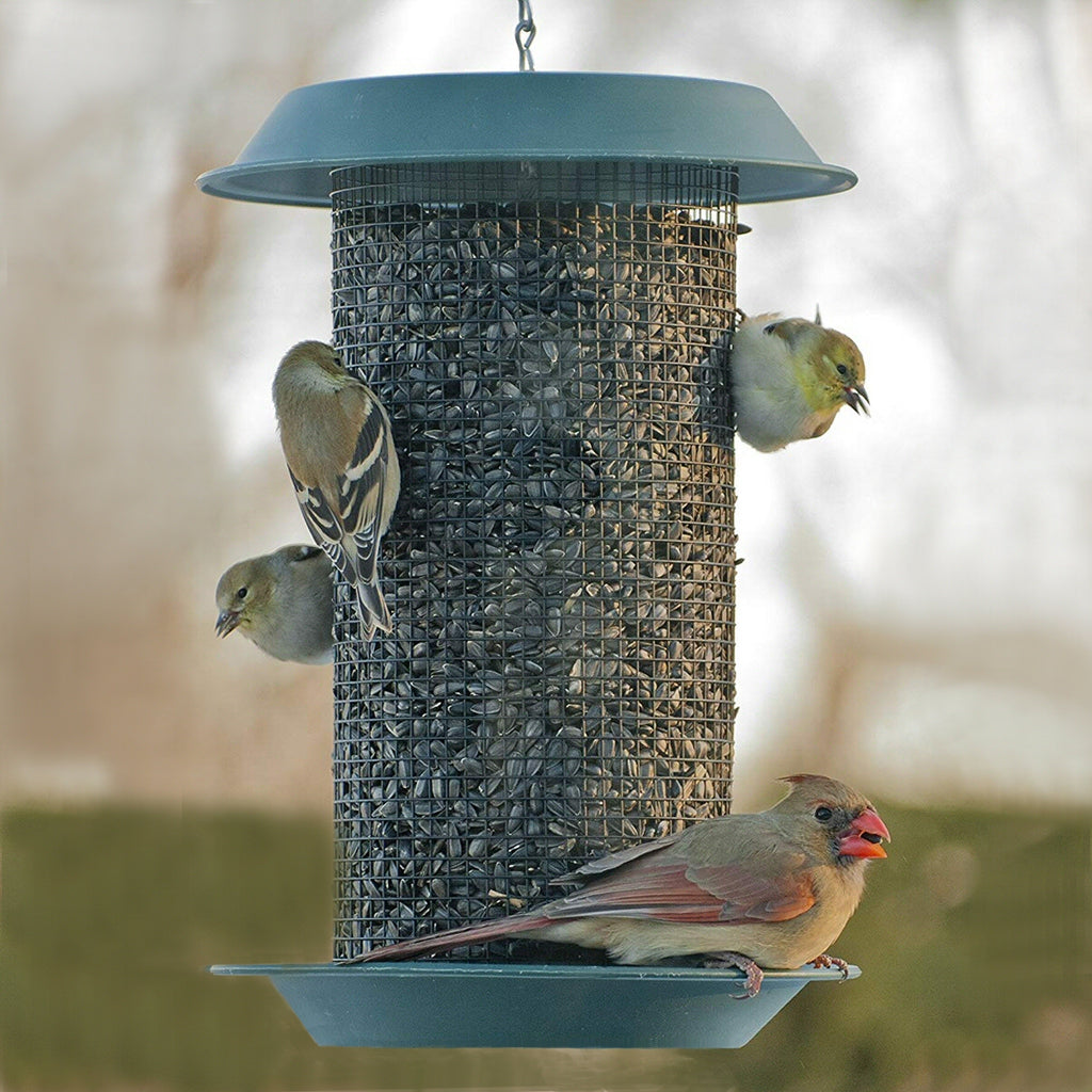 Magnum Sunflower Seed Bird Feeder