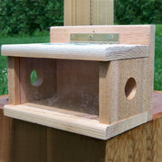 Bluebird Cedar Tree Mount Bird Feeder