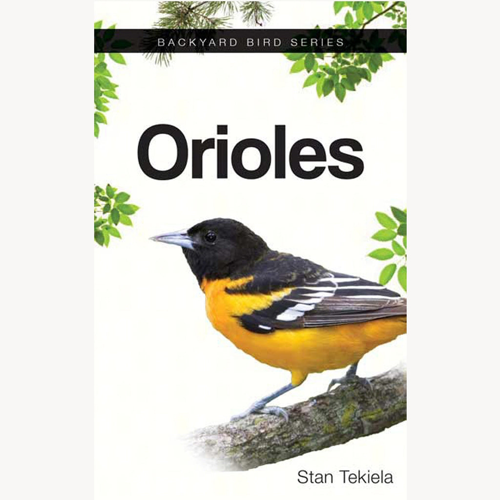 Orioles (Backyard Bird Series)