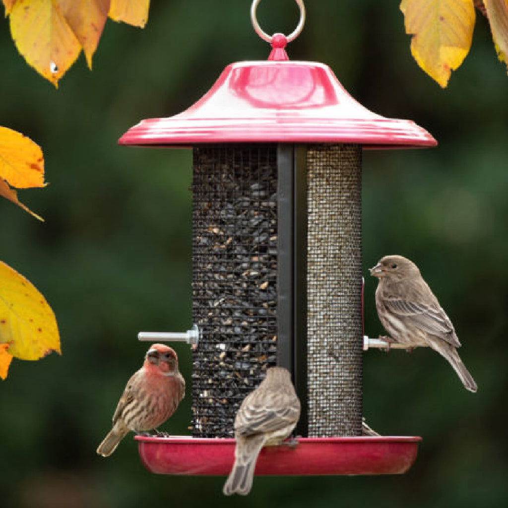 Red Rock Twin Screen Bird Feeder
