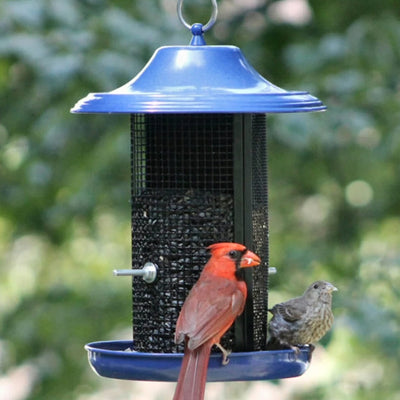 Cobalt Twin Screen Bird Feeder