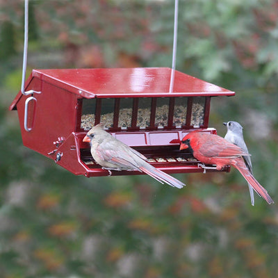Reflective Squirrel Resistant Bird Feeder