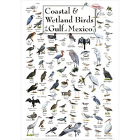 Coastal & Wetland Birds of the Gulf of Mexico Poster