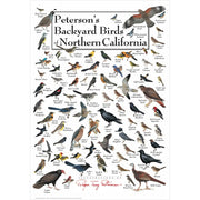 Petersons Backyard Birds of Northern California Poster