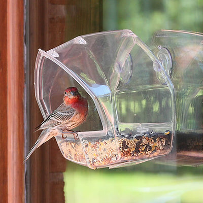 Wild Bird Clear Window Feeder