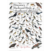 Petersons Backyard Birds of Southern California Poster