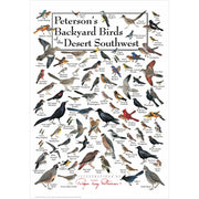 Petersons Backyard Birds of the Desert Southwest Poster
