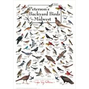 Petersons Backyard Birds of the Midwest Poster