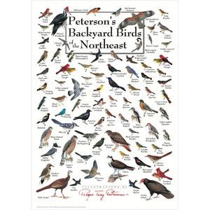 Petersons Backyard Birds of the Northeast Poster