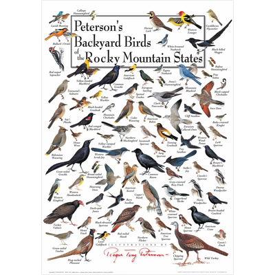 Petersons Backyard Birds of the Rocky Mountain States Poster