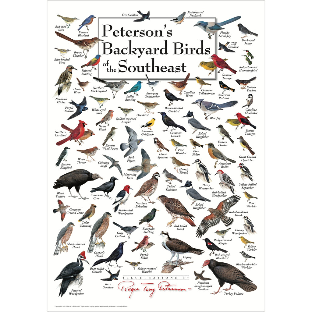 Petersons Backyard Birds of the Southeast Poster