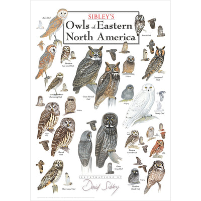 Sibleys Owls of Eastern North America Poster