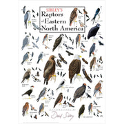 Sibleys Raptors of Eastern North America Poster