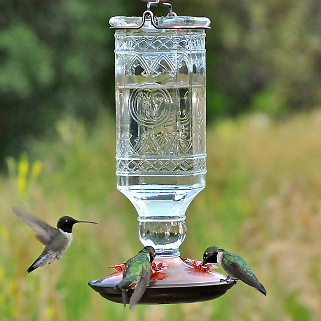 Antique Clear Bottle Hummingbird Feeder
