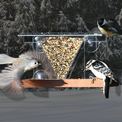 Hopper Window Bird Feeder w/Perch