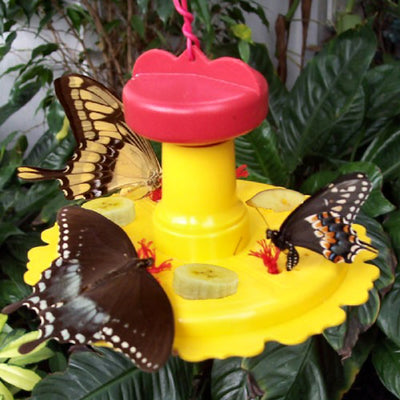 Butterfly Nectar Feeder Kit