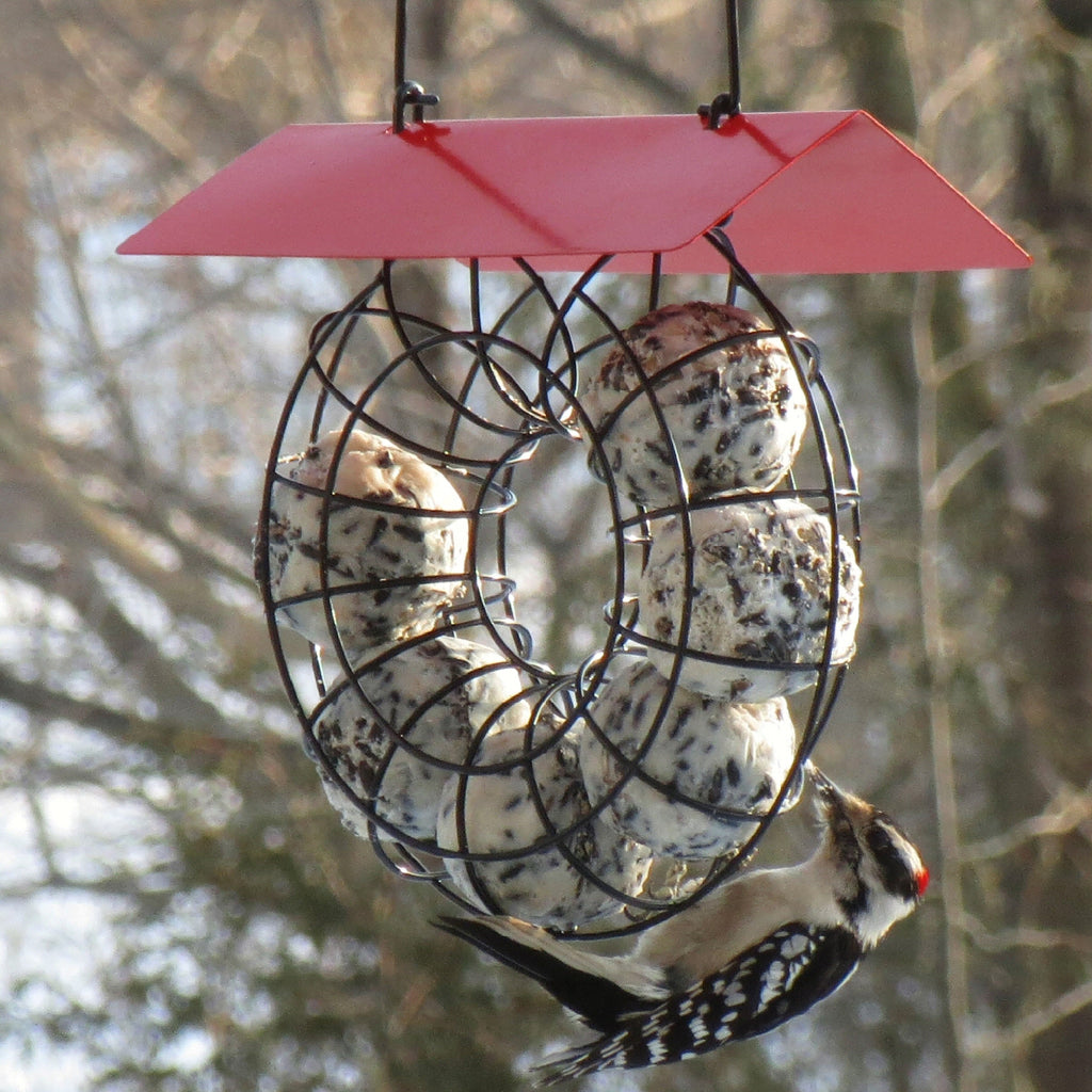 Suet & Seed Ball Bird Feeder