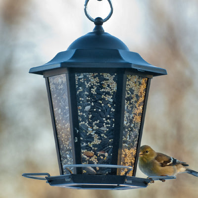 Black Carriage Lantern Bird Feeder