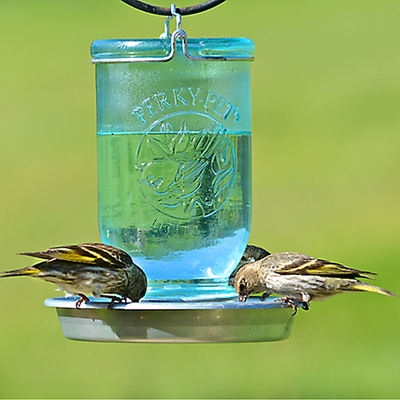 Mason Jar Wild Bird Waterer