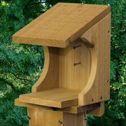 Robin's Nesting Ledge Cedar Shelf