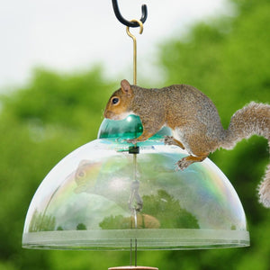 Squirrel Guard/Weather Dome Green