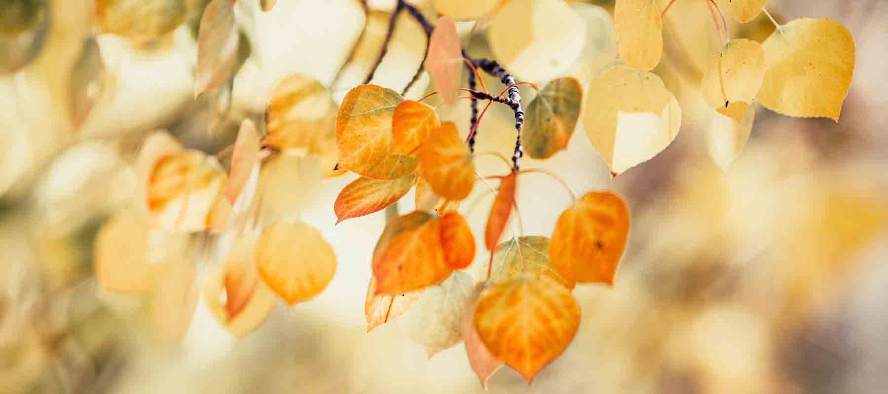 Real Aspen Leaf Necklaces
