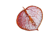 Real Aspen leaf iridescent copper brooch