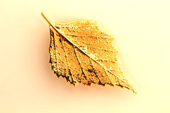 Real Birch leaf gold brooch