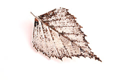 Real Birch leaf silver brooch
