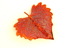 Real Cottonwood leaf iridescent copper brooch.