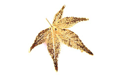 Real Japanese Maple leaf gold brooch