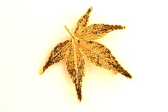 Real Japanese Maple leaf gold brooch.