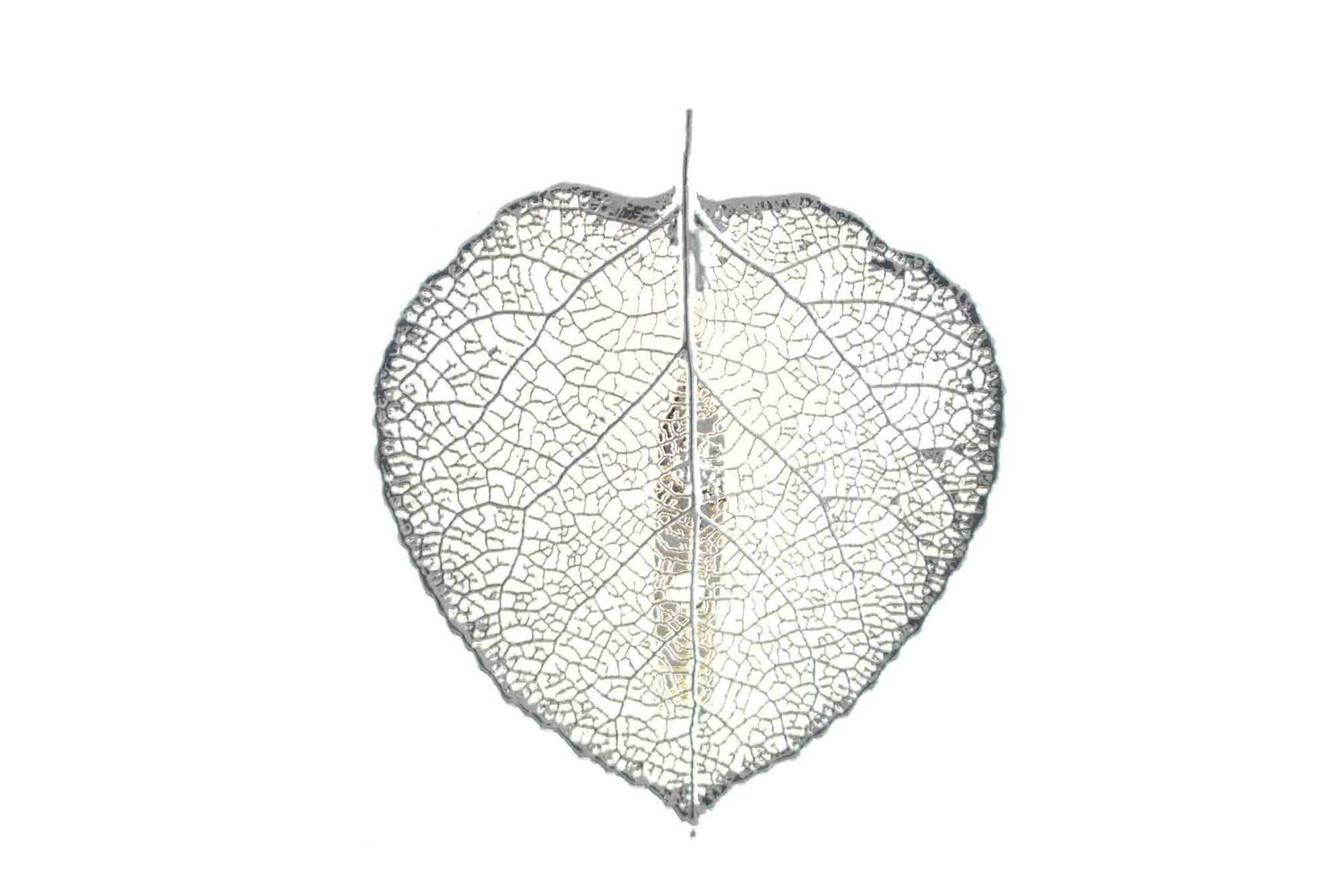 Real Aspen Leaf Brooch In Silver - Arborvita