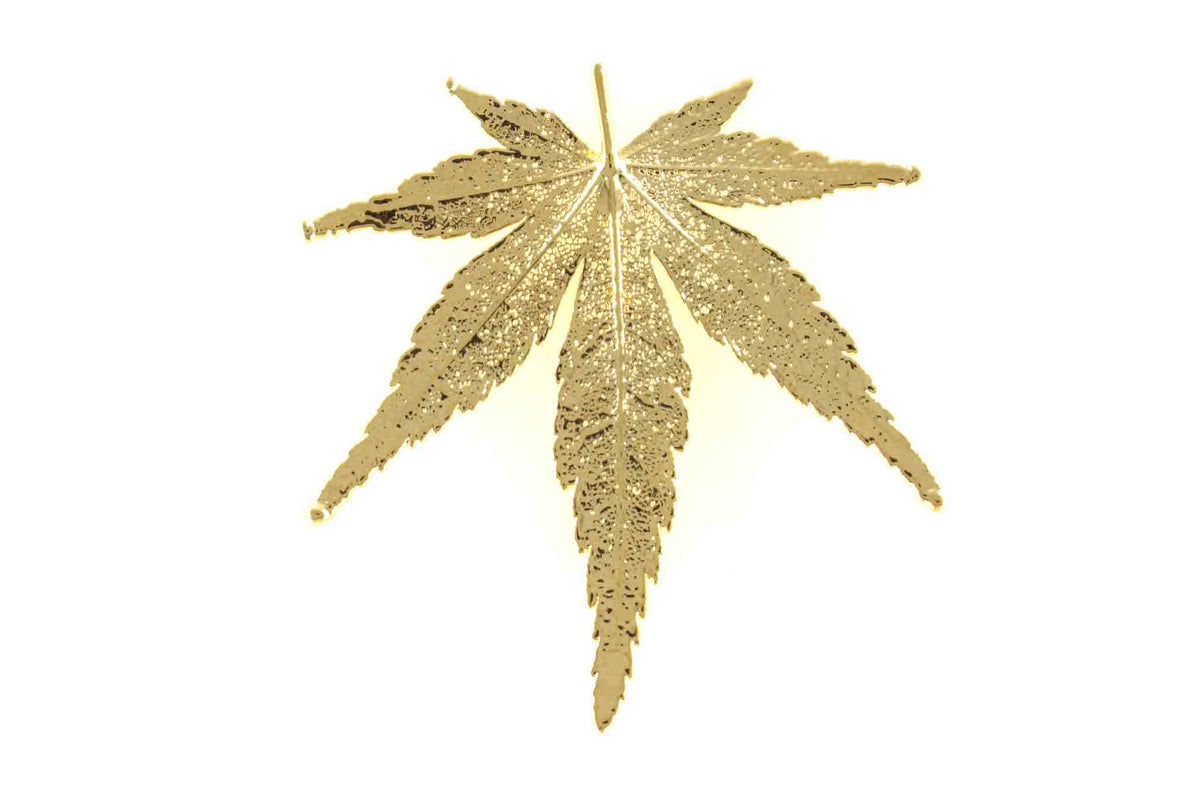 Real Japanese Maple Leaf Brooch In Gold - Arborvita