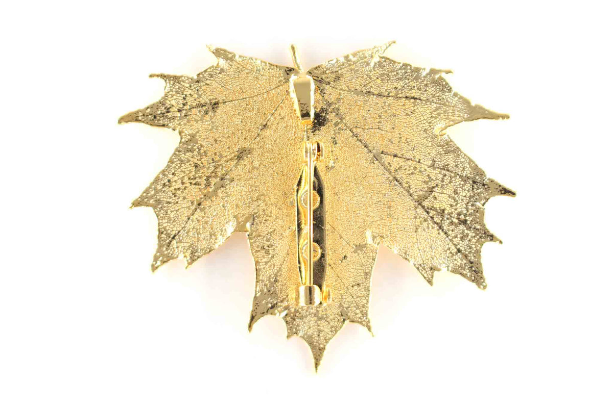 Real Sugar Maple Leaf Brooch In Gold Back - Arborvita