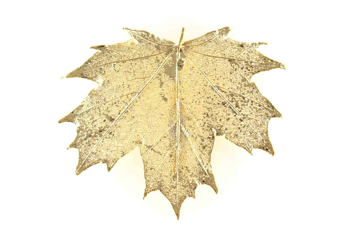 Real Sugar Maple Leaf Brooch In Gold - Arborvita