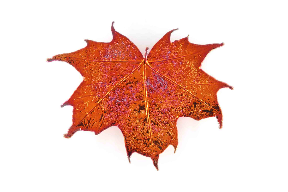 Real Sugar Maple Leaf Brooch In Iridescent Copper - Arborvita