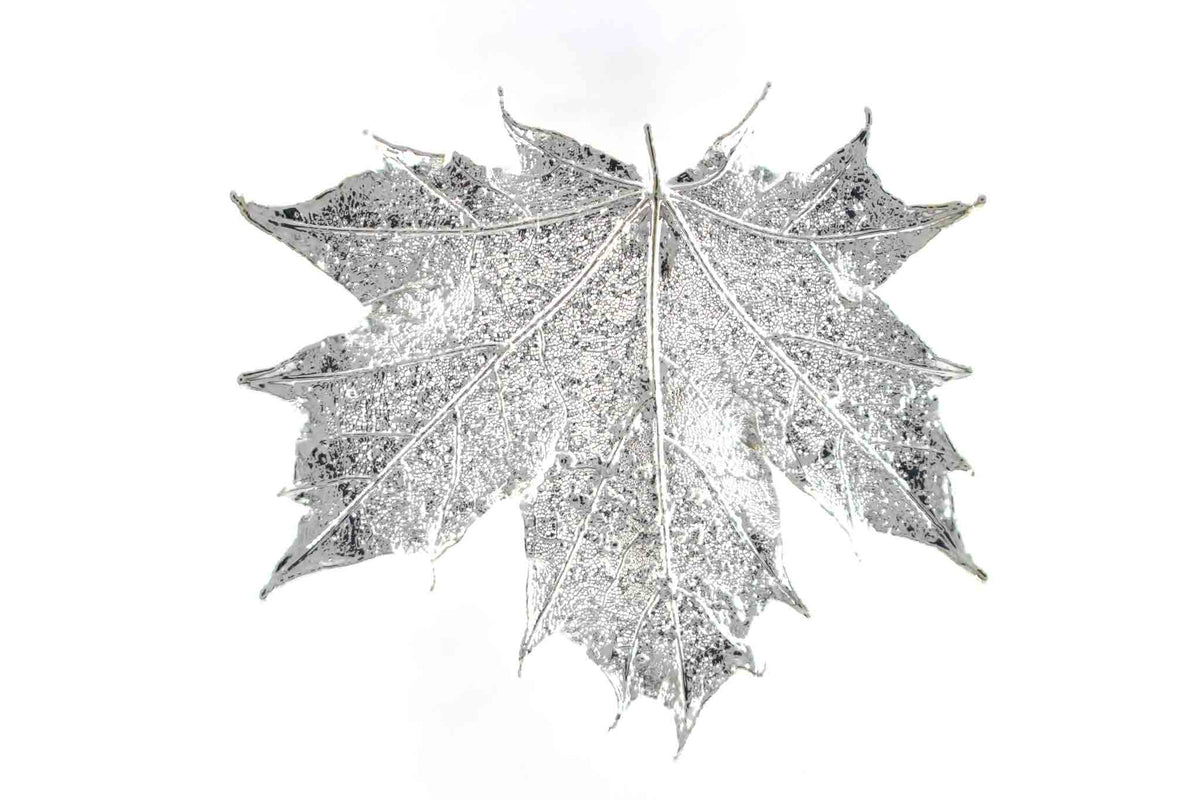 Real Sugar Maple Leaf Brooch In Silver - Arborvita