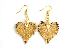 Real Cottonwood leaf gold earrings