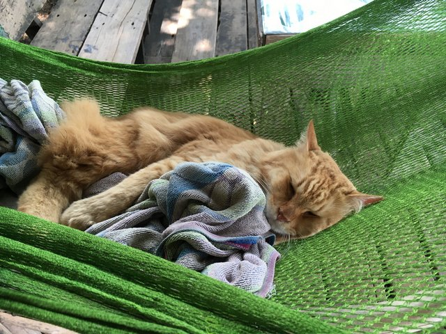 Cat sleeping with blanket in hammock