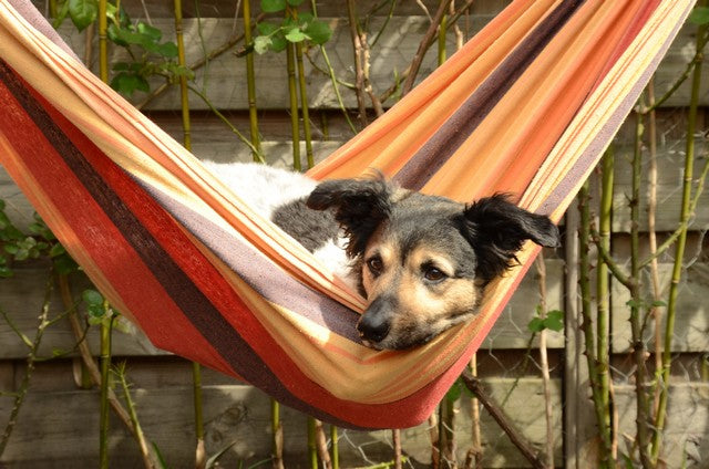 Dog lying in a hammock
