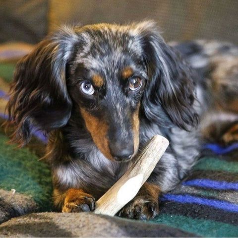 Organic Antler Chews For Dogs