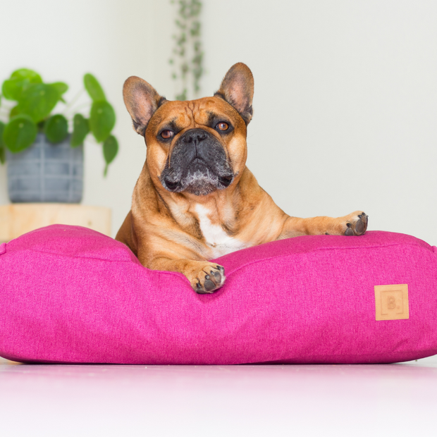 BUDDY Beds - Stock Sale up to 50%