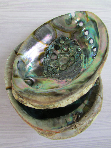 Large Abalone Shell || Fire-proof Incense and Sage Burner Dish - Burner - Cosmic Corner Savannah